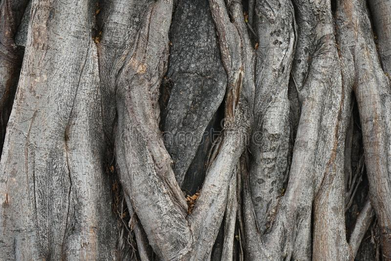 Grote houten de textuurachtergrond van de boomschors royalty-vrije stock foto's