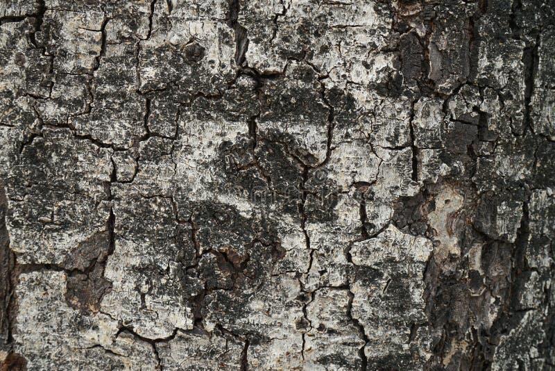Grote houten de textuurachtergrond van de boomschors royalty-vrije stock fotografie