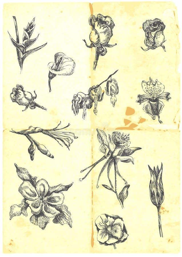 Grote inzameling van bloemen royalty-vrije illustratie