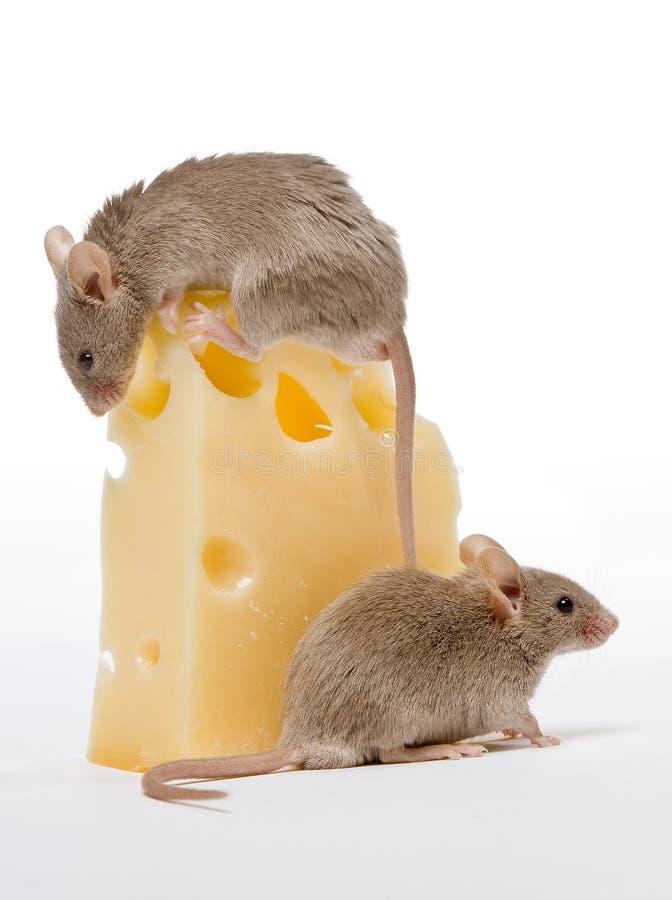 Grote kaas stock afbeeldingen