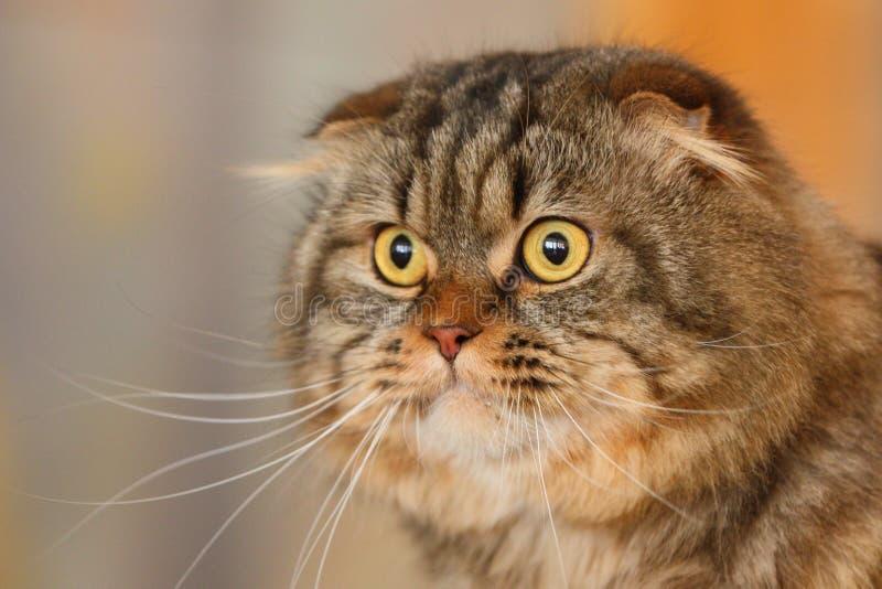 Grote kat royalty-vrije stock fotografie