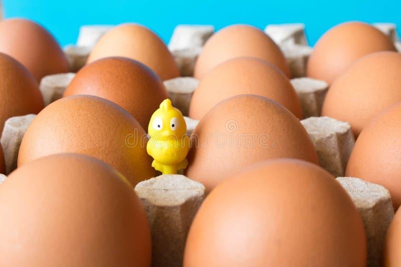 Grote kippeneieren in een kartondoos en een klein geel stuk speelgoed kuiken stock fotografie