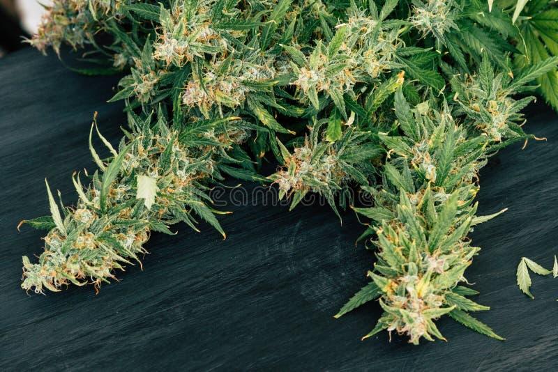 Grote knoppen van verse cannabis op een zwarte achtergrond van een houten lijst royalty-vrije stock foto
