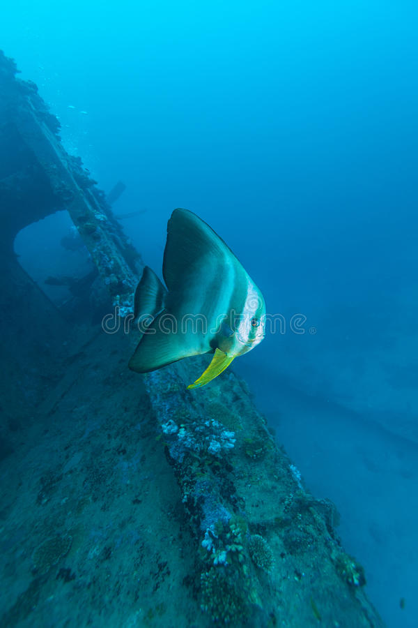 Grote Knuppelvissen en schipbreuk royalty-vrije stock fotografie