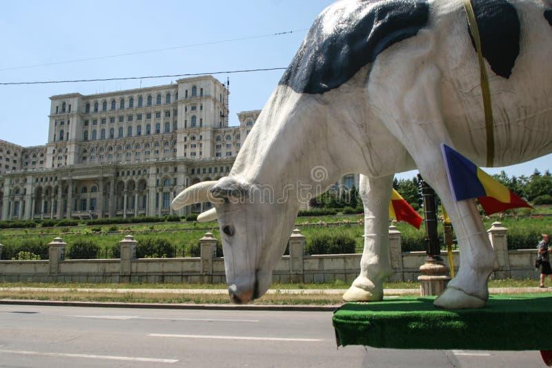 Grote koe bij landbouwersprotest royalty-vrije stock foto's