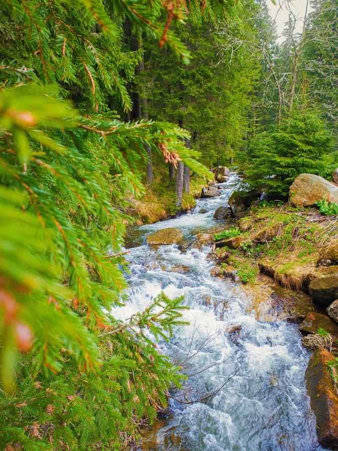 Grote landschapsmening als rivier die door de wilde aard van bergheuvels vloeien Prutrivier in Karpatische Bergen, Hoverla-Piek royalty-vrije stock afbeeldingen