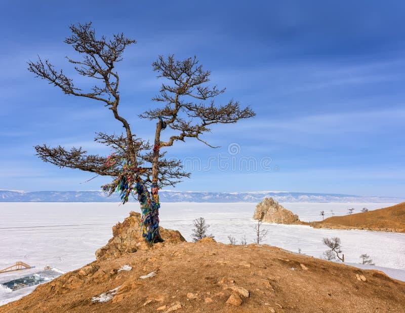 Grote lariks op kust van de winter Baikal stock foto