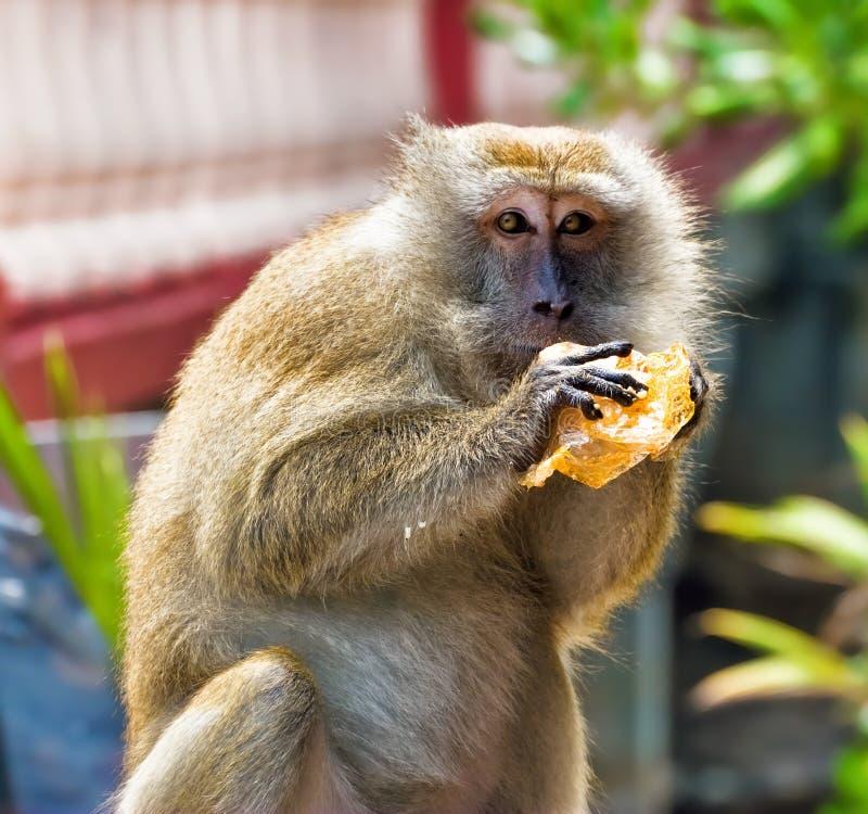 Grote mannelijke apen royalty-vrije stock afbeeldingen