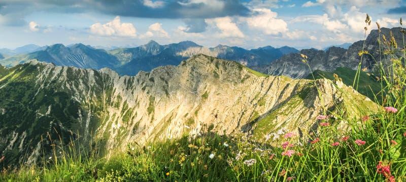 Grote mening aan bergen in mooi licht Bloemen en gras stock foto's