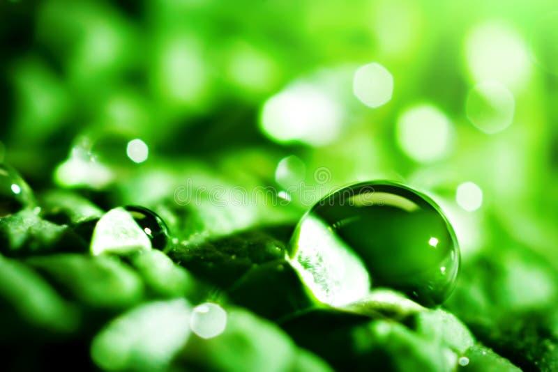 Grote mooie dalingen van transparant regenwater op een groen blad Macro Natuurlijke achtergrond Selectieve nadruk royalty-vrije stock foto's