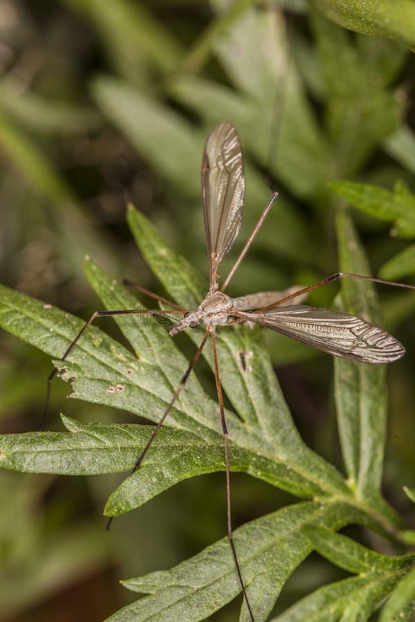 Grote mug op groen blad royalty-vrije stock afbeeldingen