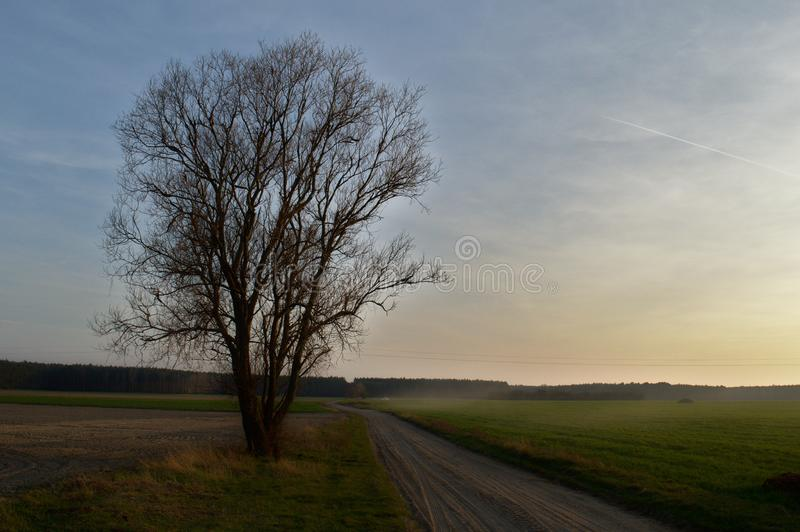 Grote naakte boom door de landweg royalty-vrije stock afbeeldingen