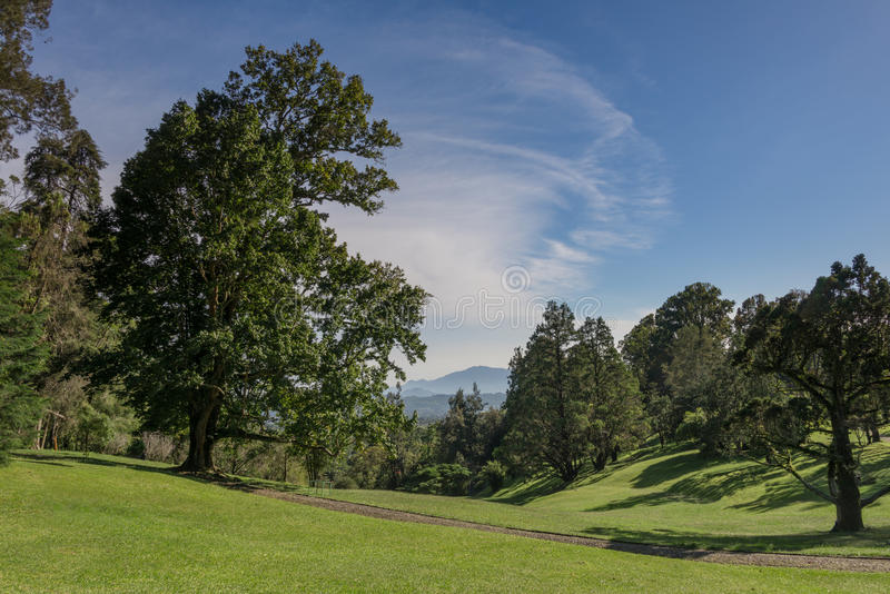 Grote natuurlijke tuin royalty-vrije stock foto's