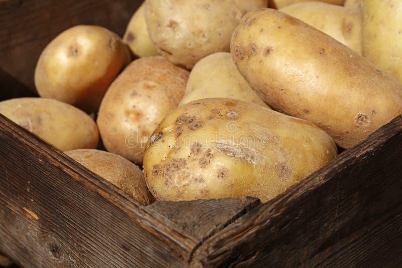 Grote nieuwe aardappel in uitstekende houten doos dichte omhooggaand royalty-vrije stock foto