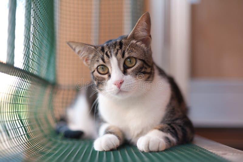 Grote Ogen Cat Portrait op plastic netto gesloten terras in zonnige D royalty-vrije stock afbeelding
