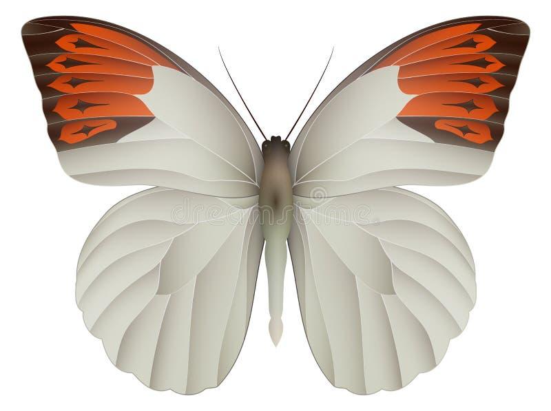 Grote oranje die uiteindevlinder op een wit wordt geïsoleerd royalty-vrije illustratie