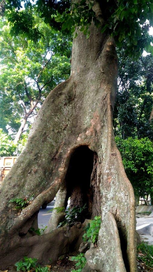Grote oude boom royalty-vrije stock foto