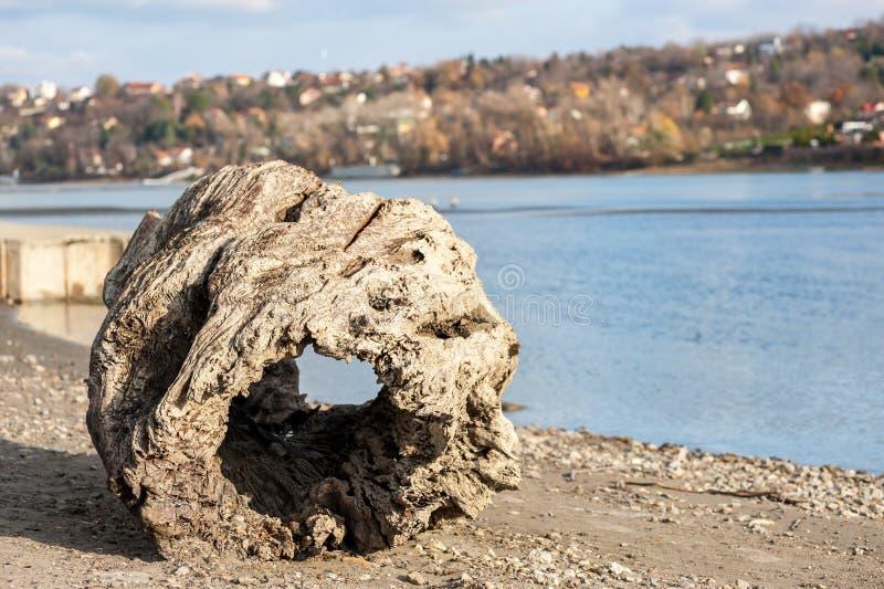 Grote oude rotte boomstomp met gat als drijfhout op de zandige die strandoever dichtbij water door getijde wordt gebracht royalty-vrije stock foto's