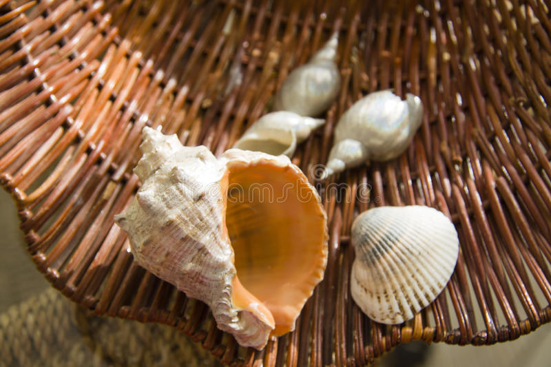 Grote Overzeese shells over stroachtergrond royalty-vrije stock foto's