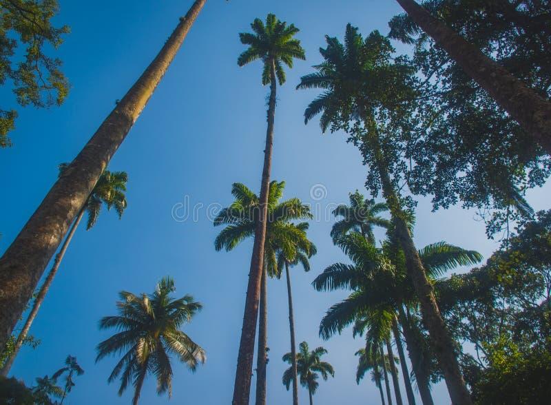 Grote palm royalty-vrije stock foto's
