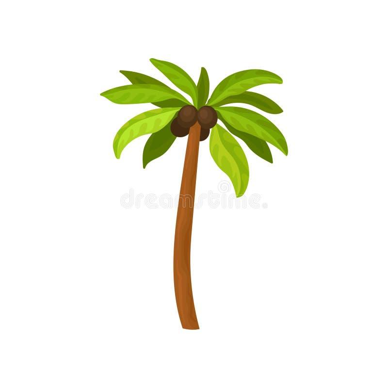 Grote palm met kokosnotenvruchten en groene bladeren Landschapselement voor mobiel spel Tropische Installatie Vlak vectorpictogra royalty-vrije illustratie