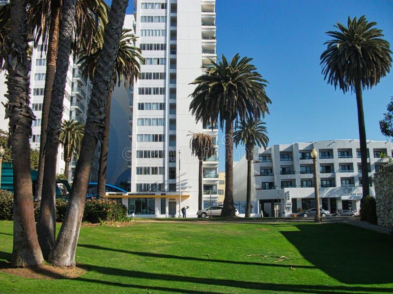 grote palmen in het strand van Miami stock foto's