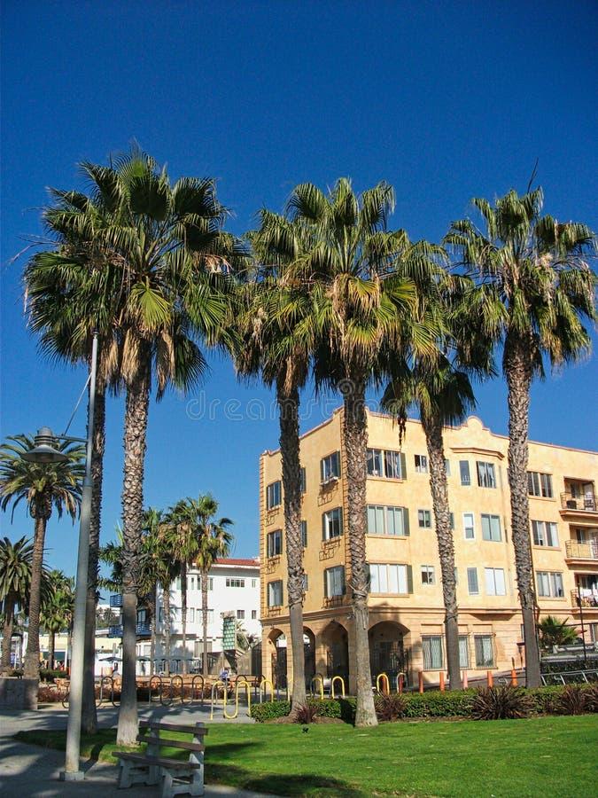 grote palmen in het strand van Miami stock afbeelding