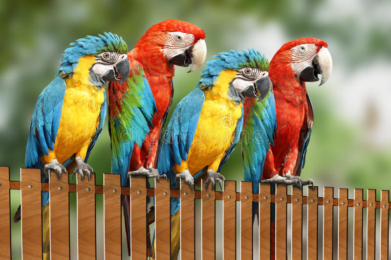 Grote papegaai vier