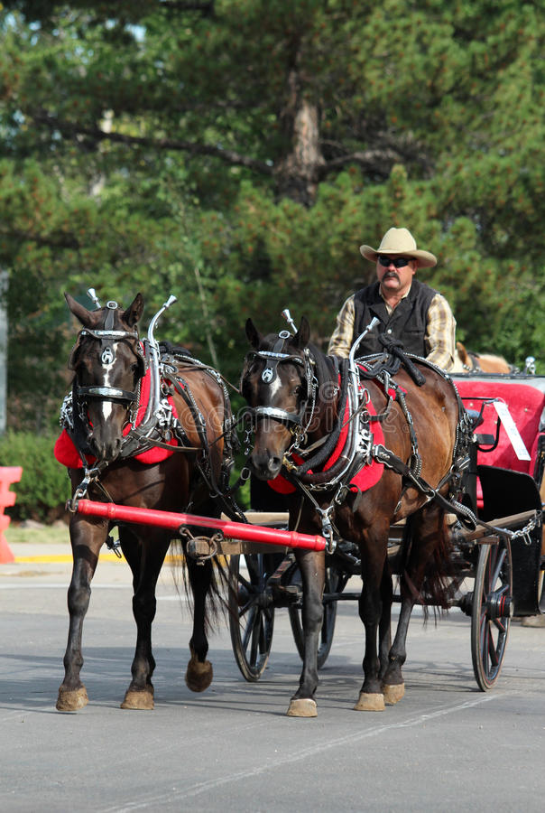 Grote Parade, Cheyenne Frontier Days stock foto's