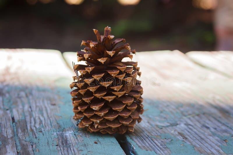 Grote Pinecone op een Houten Picknicklijst in een Bos in Zuidenmeer Tahoe stock foto's