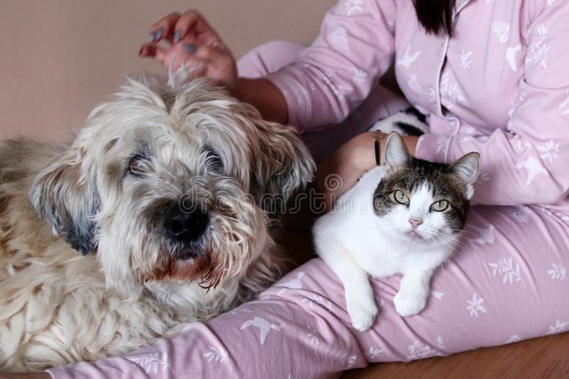 Grote pluizige Zuiden Russische Herder Dog en witte gestreepte katkat op knieën van hun eigenaar stock afbeeldingen