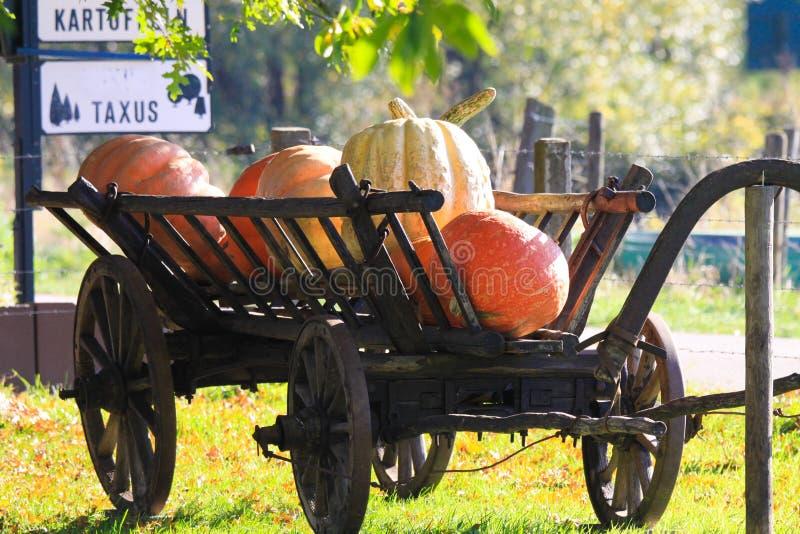 Grote pompoenen op geïsoleerde oude antieke houten karwagen in heldere de herfstzon op een weide van een Nederlands landelijk lan stock afbeelding