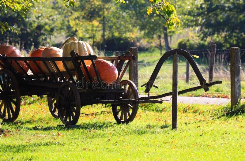 Grote pompoenen op geïsoleerde oude antieke houten karwagen in heldere de herfstzon op een weide van een Nederlands landelijk lan stock fotografie