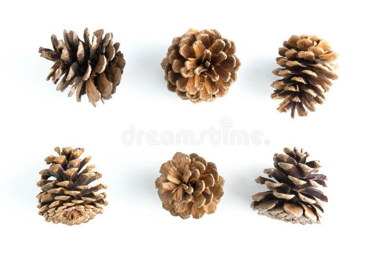 Grote reeks kegels diverse geïsoleerde naaldbomen royalty-vrije stock afbeelding