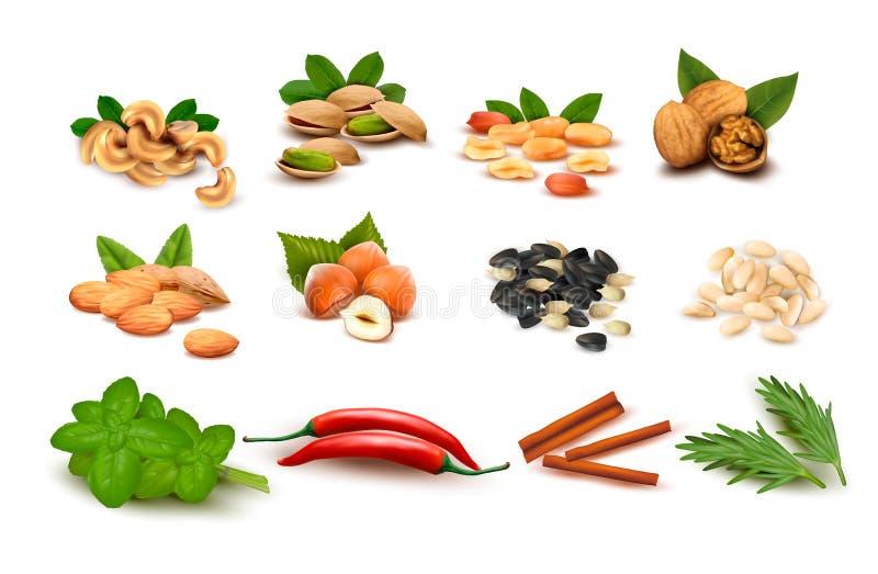 Grote reeks rijpe noten en zaden en kruiden royalty-vrije illustratie