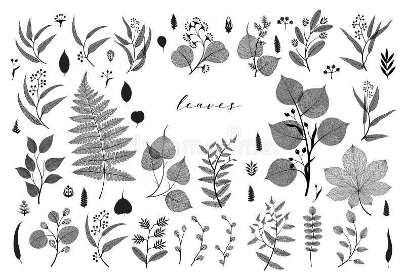 Grote reeks takken en bladeren, daling, de lente, de zomer Uitstekende vector botanische illustratie, bloemenelementen in zwart o stock illustratie