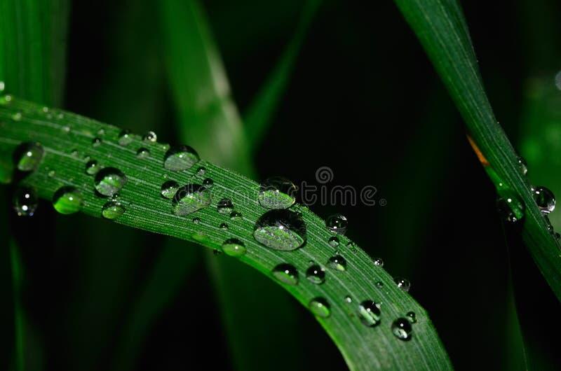 Grote regendruppel op blad royalty-vrije stock foto's