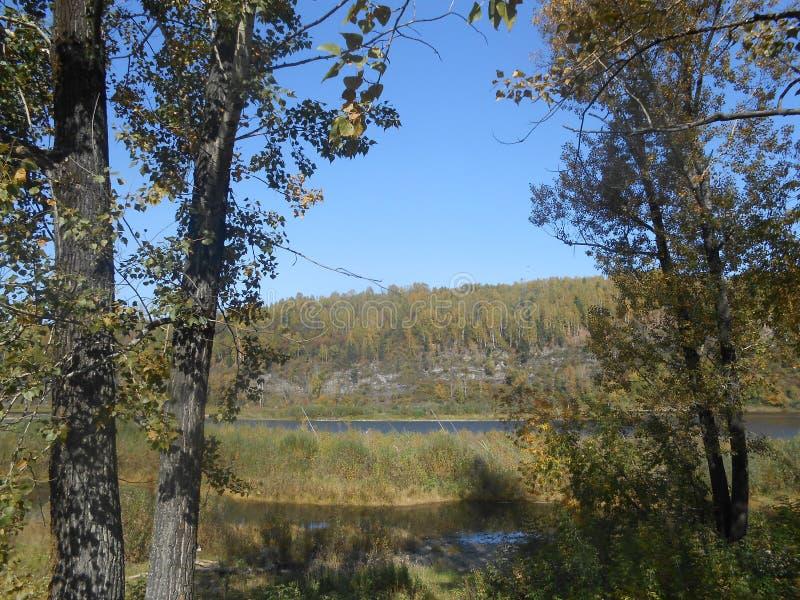 Grote rivier in het bos tot zomerdag op het platteland royalty-vrije stock foto's