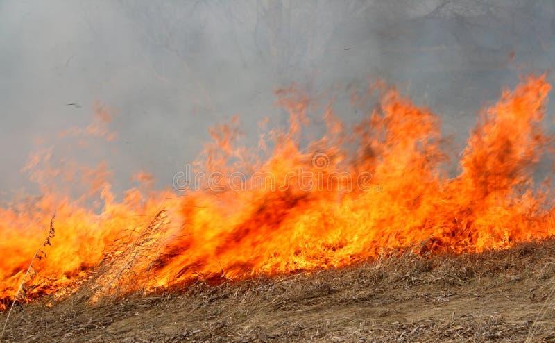 Grote rode brand op gebied royalty-vrije stock foto's
