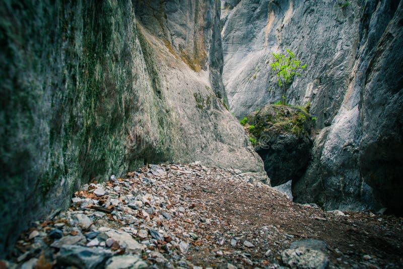 Grote rots in de bergen royalty-vrije stock fotografie