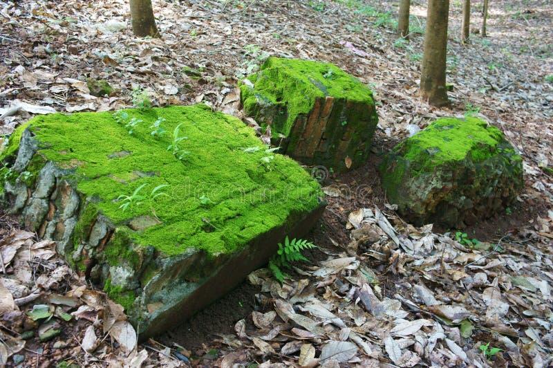 Grote rots in groen mos royalty-vrije stock afbeeldingen