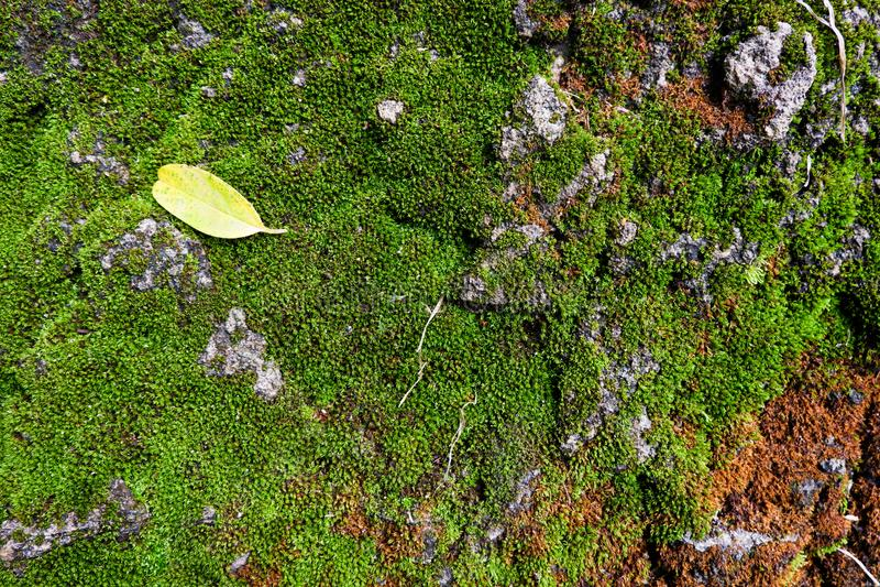 Grote rotsachtergrond met groen mos, textuurpjhotography stock foto