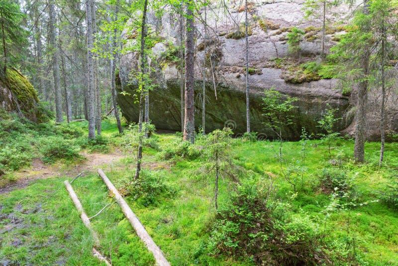 Grote rotsen in het bos royalty-vrije stock fotografie