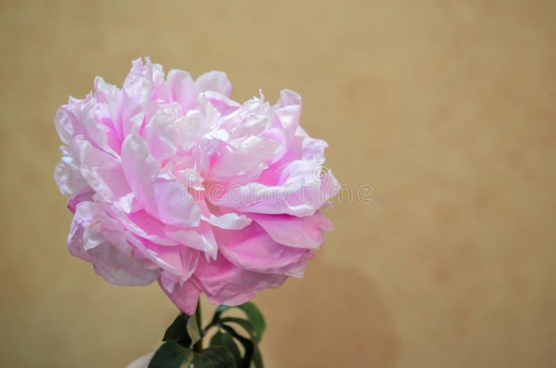 Grote roze bloem stock foto