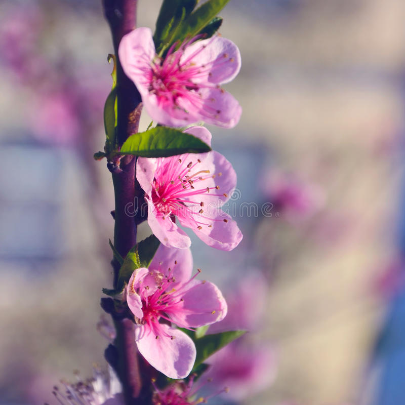 Grote roze bloem drie stock fotografie