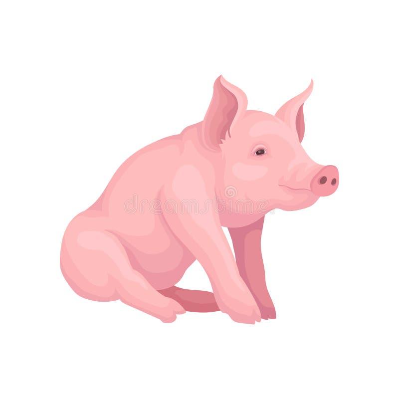 Grote roze die varkenszitting op witte achtergrond wordt geïsoleerd Landbouwbedrijfdier met vlakke snuit, hoeven en afluisteraar  royalty-vrije illustratie