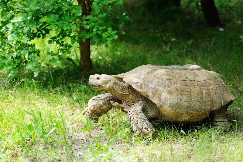 Grote schildpad bij de dierentuin royalty-vrije stock foto