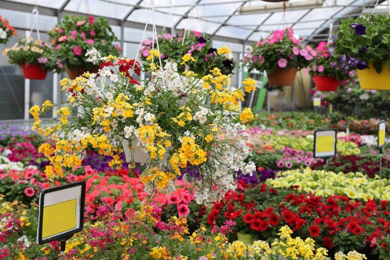 grote serre met mooie bloemen en installaties voor verkoop stock afbeelding