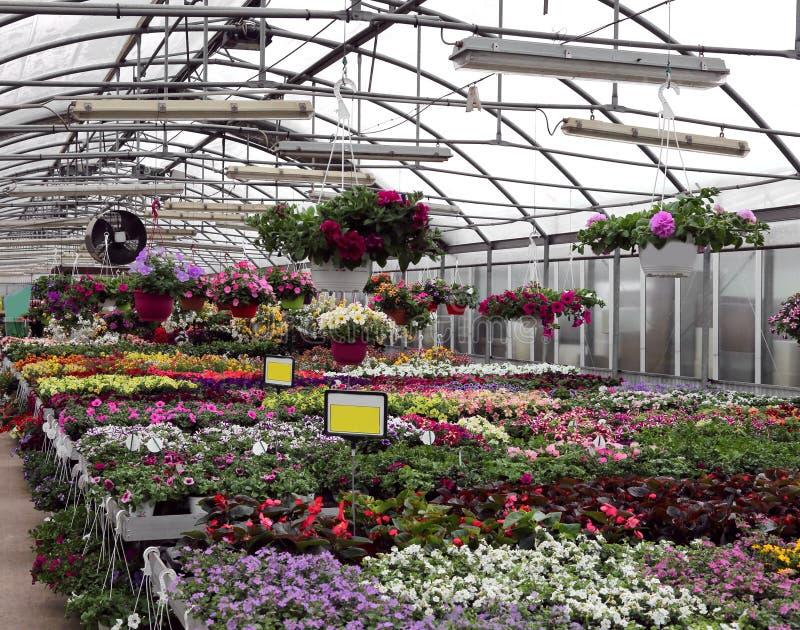 grote serre met mooie bloemen en installaties voor verkoop in t royalty-vrije stock foto's