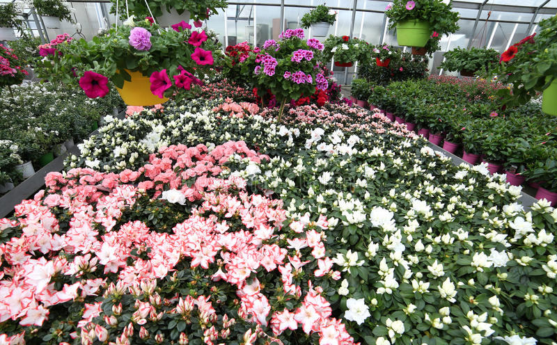 grote serre met mooie bloemen en installaties voor verkoop in t stock foto's